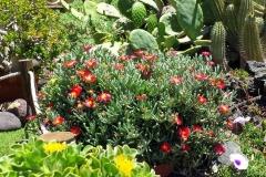 Secretchill-Garden-with flower