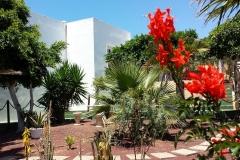 Secretchill Garden  flowers