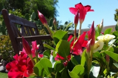 Secretchill Garden  bench and flowers
