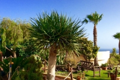 Secretchill Garden  with palm trees